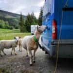 Туры в Норвегию